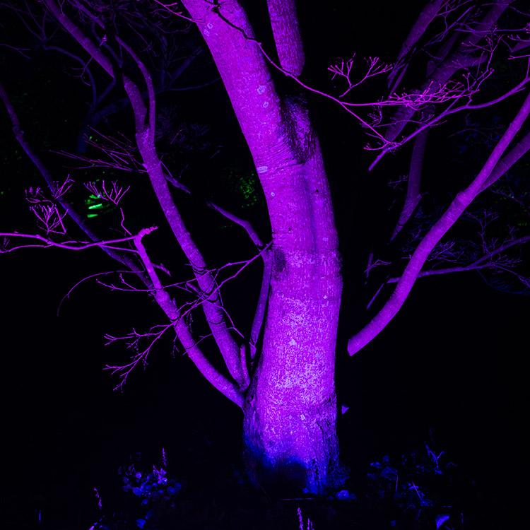Tree illuminated in purple theme lighting.